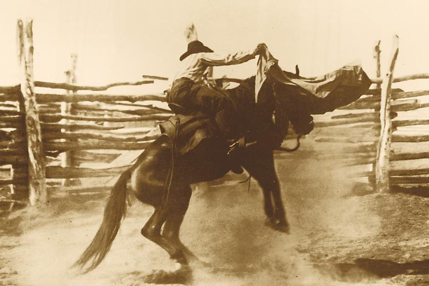 bucko_horse