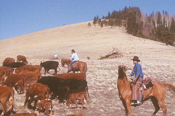 cattle-drive-dude-ranch