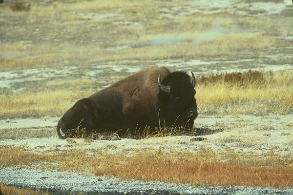 karen-buffalo