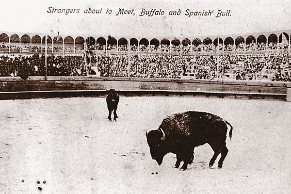 Cowboy Scotty Philip set the stage for the 100-year-old bullfight.