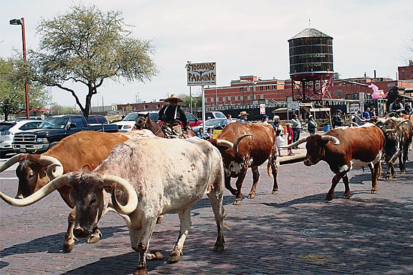 Droving with Rawhide, Lonesome Dove and the Fort Worth herd.