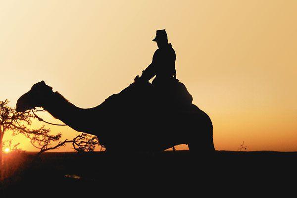 jul09_texas_camel
