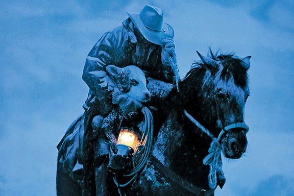 David Stoecklein captures the ranching lifestyle--digitally.