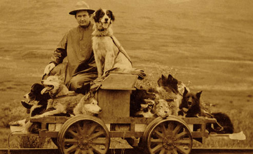 faithful_dog_sled_dogmobile_alaska_rail-cart
