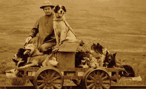 faithful_dog_sled_dogmobile_alaska_rail-cart