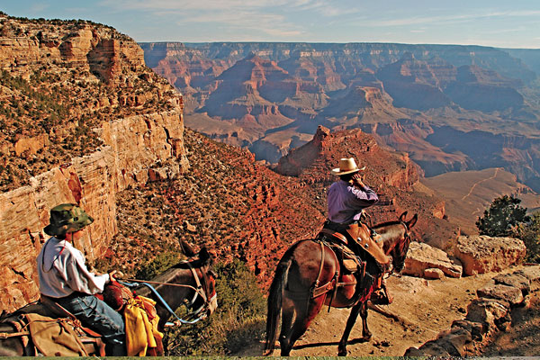 grand-canyon-national-park_mule-train-down-canyon