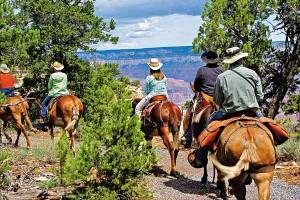 mule-train-ride_grand-canyon