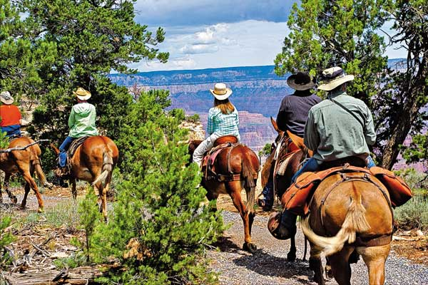 mule-train-ride_grand-canyon