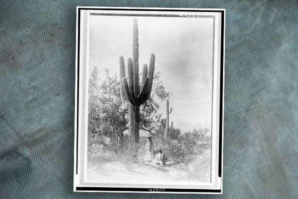 pima-women-gathrering-saguaro-fruit-by-edward-curtis-loc-3c01252r-blog