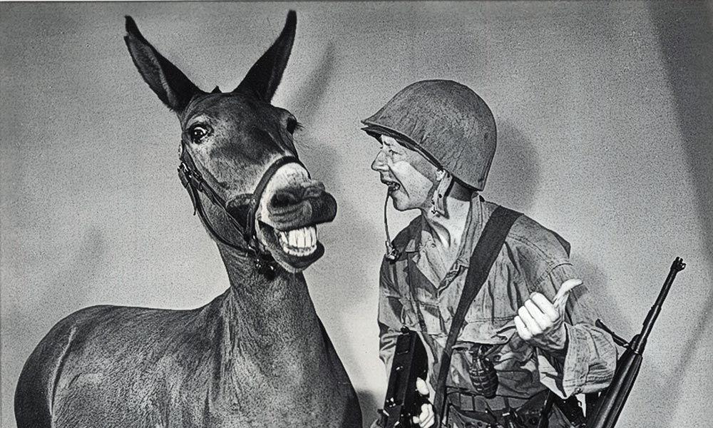 francis the talking mule donald oconnor true west