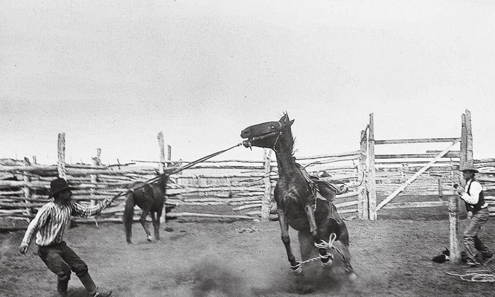Bronco bronc fight true west