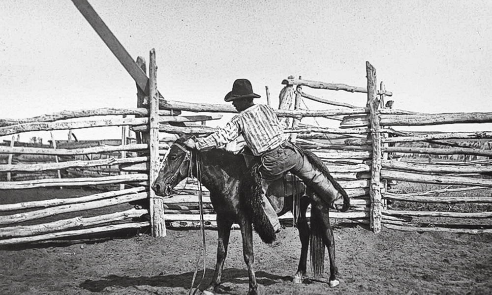 bronc bronco young horse bustin broncs true west
