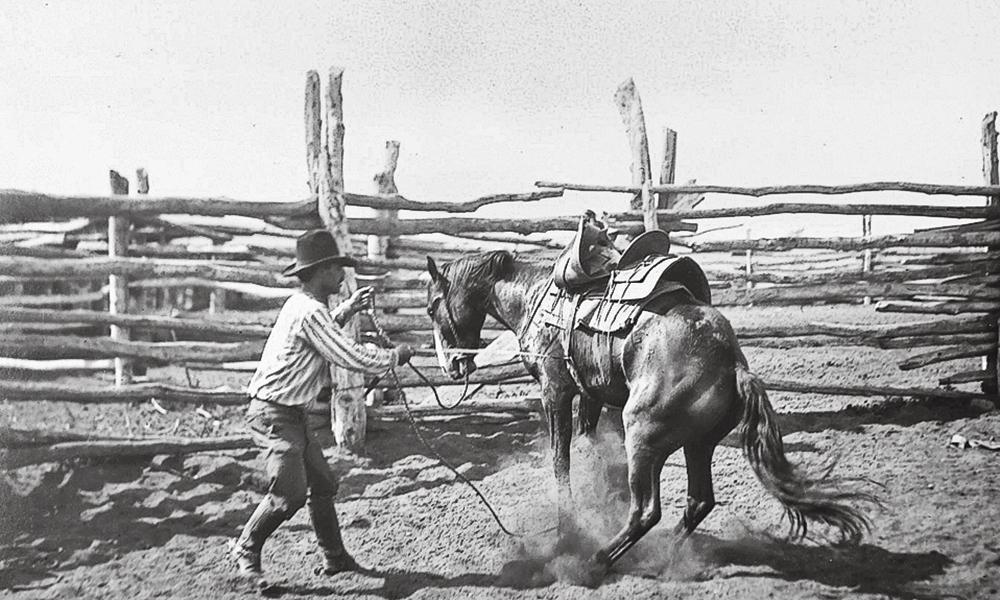 Bronco bronc breaking young horse true west