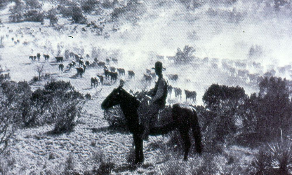 cowboy and cattle true west