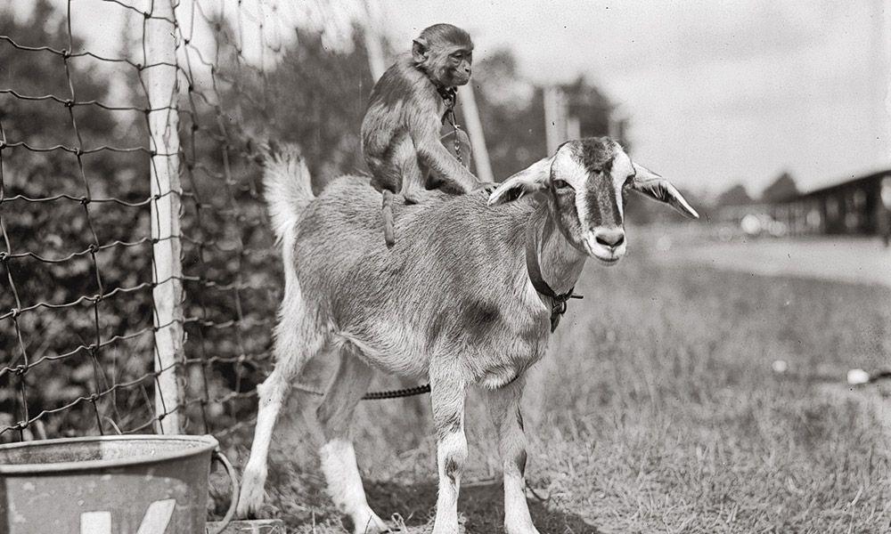 Monkey Buffalo Bill True West Magazine
