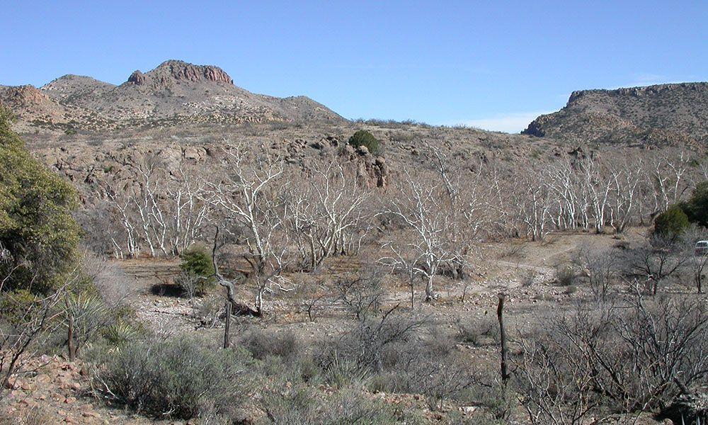 Skeleton Canyon Guadalupe Canyon True West Magazine