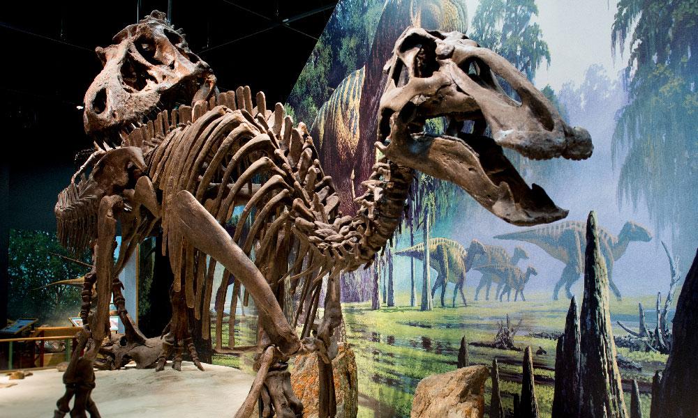 Dinosaur skeleton in museum in Montana