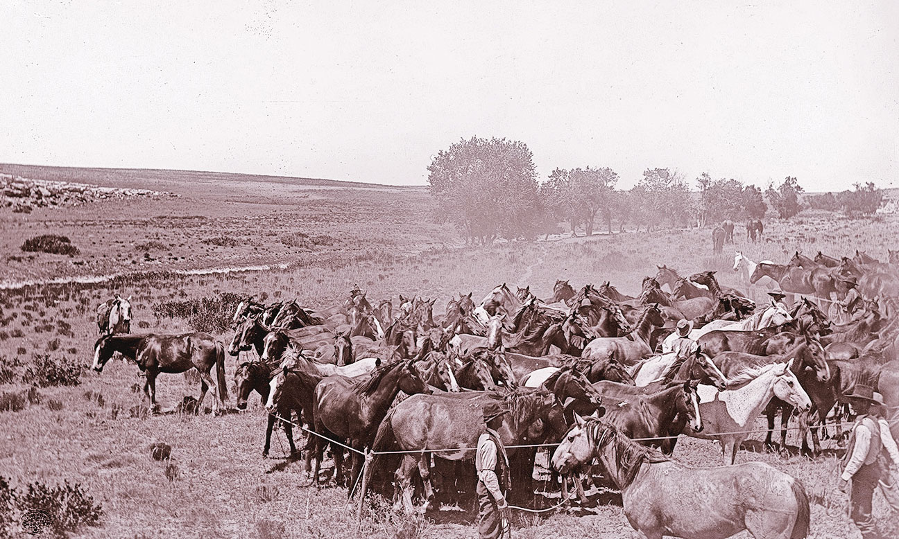 historic cattle drive in the west true west magazine
