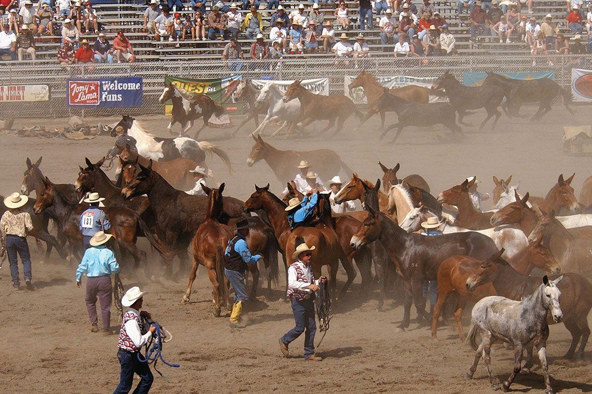 bishop mule days california true west magazine