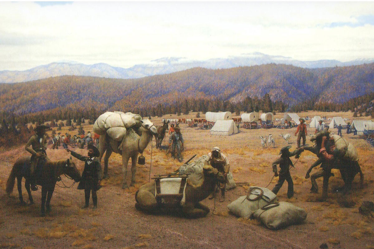 camel expedition artwork true west magazine