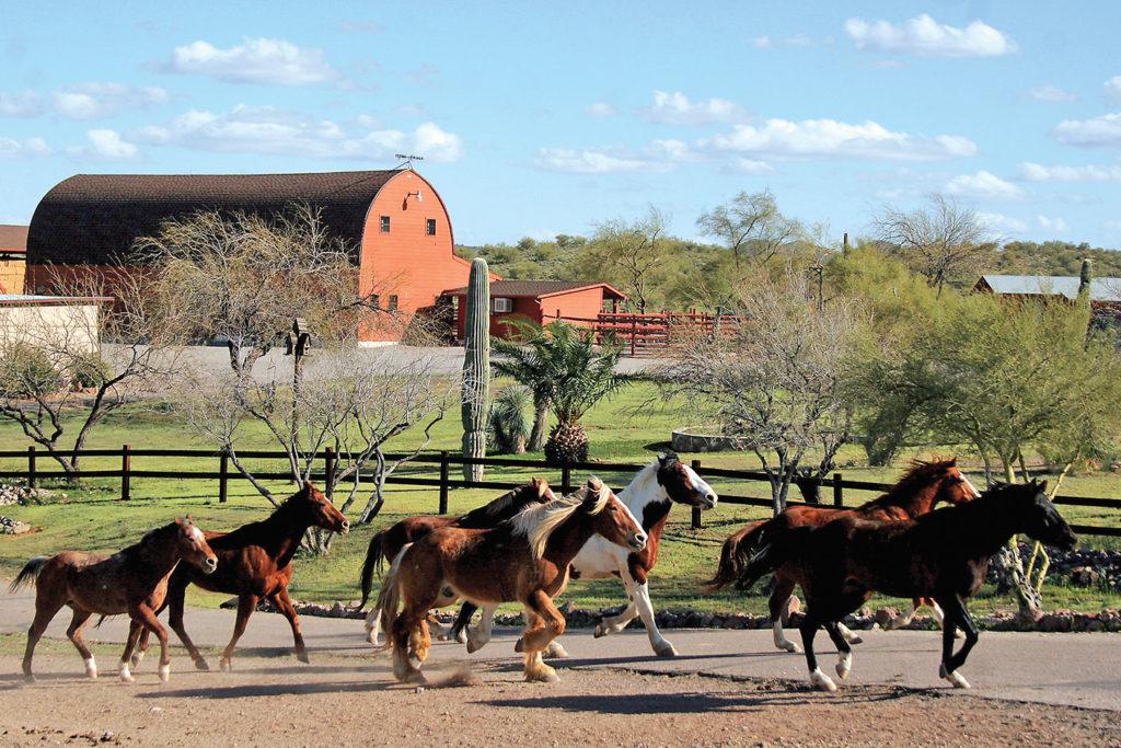 Flying E Ranch True West