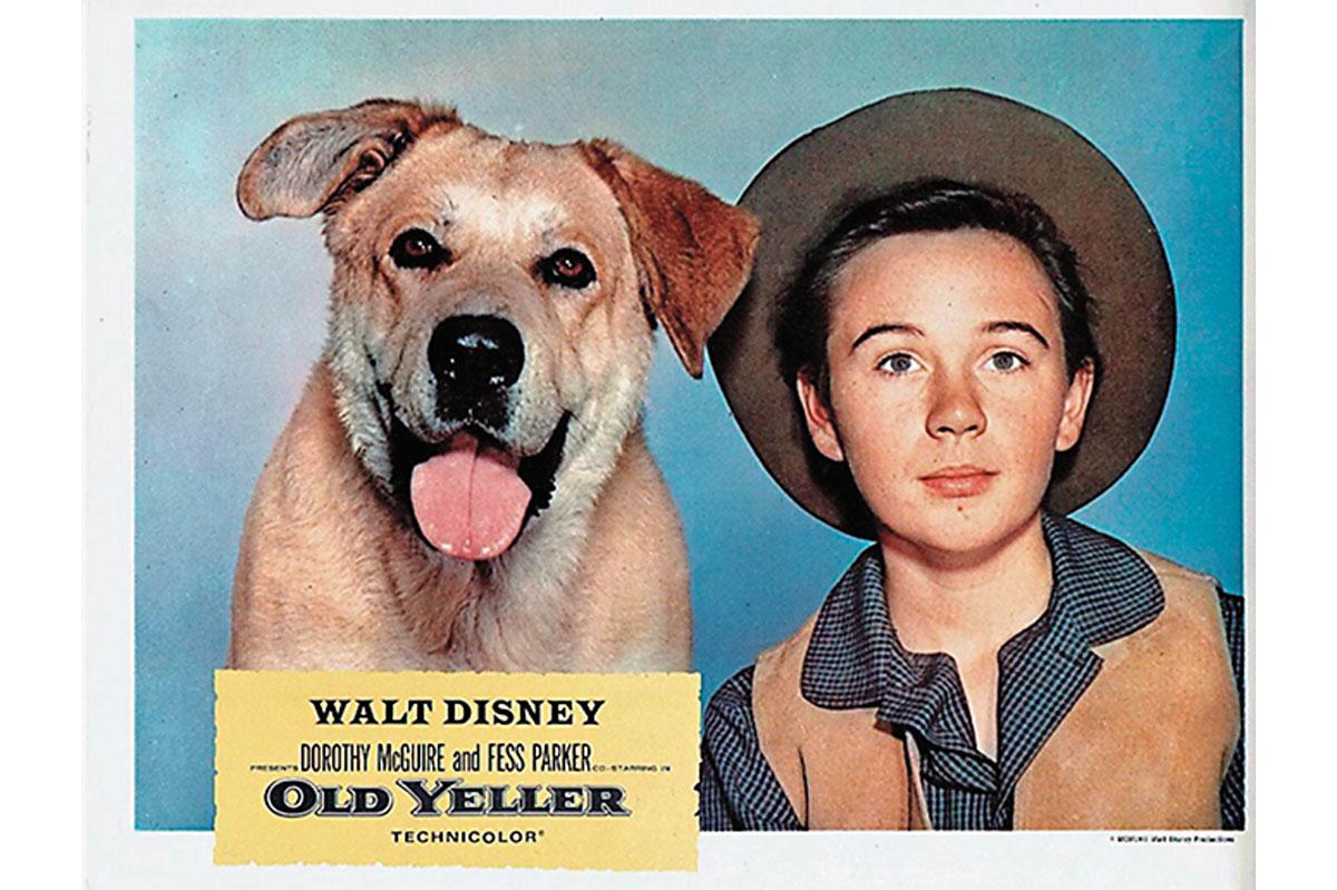 old yeller western movies true west magazine